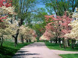 alberifioriti.jpg